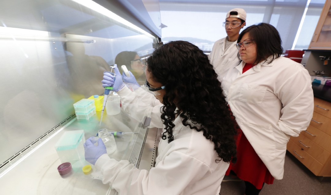 RARE student Sareena Karim '22, forefront, works in the Chow Lab led by Lesley Chow, assistant professor of bioengineering and materials science and engineering